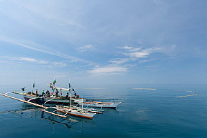 Baling (local purse seine fishing boat) catching �dilis, the Tagalog term for anchovies. The fishermen pull in the vessel's massive net, hauling in catches of anchovies or silversides. Northern Palawa... - Jurgen Freund