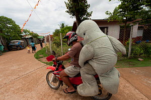 Mascot 'Waddy', part of a conservation project for the Irrawaddy dolphin (Orcaella brevirostris), getting a lift home on a motorcycle. North Palawan, Philippines, May 2009.  -  Jurgen Freund