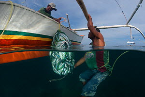 Fisherman with a net full of freshly blasted or dynamited schooling fish collected from the reef. Phillipines, April 2009.  -  Jurgen Freund