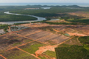 Aerial view of palm oil plantations (Elaeis guineensis). Sabah, Malaysia, June 2009. - Jurgen Freund