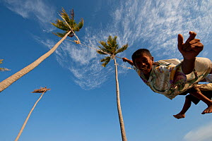Bajau boys playing on a rope swing hung high up in two tall coconut trees. Sibuan Island, Malaysia, June 2009.  -  Jurgen Freund