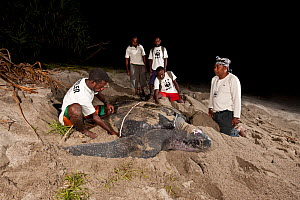 WWF Sorong team with local Papuan patrollers doing Leatherback turtle (Dermochelys coriacea) research. Warmamedi beach, Bird's Head Peninsula, West Papua, Indonesia, July 2009.  -  Jurgen Freund