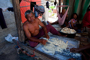 Man making patties of Cassava. The tuber is grated and serves as food staple, more common than rice for remote Indonesians. Runduma Island, Sulawesi, Indonesia, November 2009  -  Juergen Freund