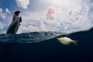 Kite fisherman using a kite and fishing line. Skipjack tuna are a common catch. Sulawesi, Indonesia, November 2009.  -  Jurgen Freund