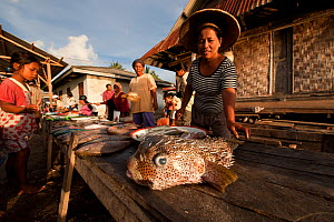Vendors selling fish (including Pufferfish) in the Wangi Wangi afternoon public market. Wakatobi, Sulawesi, Indonesia, November 2009.  -  Jurgen Freund