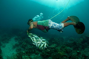 Fisherman collecting freshly blasted or dynamited schooling fish in the reef. Phillipines, April 2009.  -  Juergen Freund