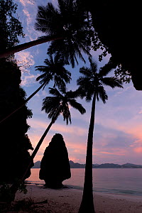 Silhouette of karst limestone outcrop and Coconut trees (Cocos nucifera) of Entalula Island at sunset. El Nido, Northern Palawan, May 2009.  -  Jurgen Freund