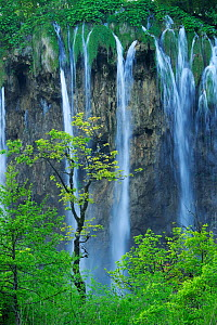 A cascade of waterfalls falling over a cliff in woodlands. Plitvice National Park, Croatia, May 2010. - Robert Thompson