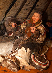Nyaka, an elderly Nenets woman, using reindeer sinew to sew traditional clothing inside her family's reindeer skin tent. Tambey tundra, Yamal Peninsula, Western Siberia, Russia. March 2011 - Bryan and Cherry Alexander