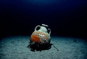 Roman Amphora on sea floor, Ustica Island, Italy,  Mediterranean Sea  -  Jeff Rotman