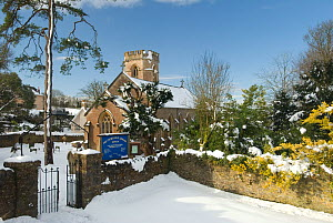 Church of St Leonard, Shipham, after heavy snowfall, Somerset, February 2009  -  Nigel Bean