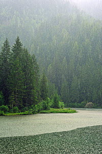 Heavy rain pouring down on lake Lago dei Caprioli surrounded by pine forest. Dolomites, Italy, July 2010.  -  Philippe Clement