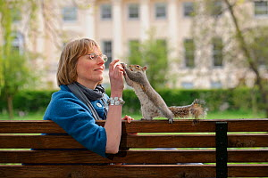 Woman sitting on bench, hand feeding Grey Squirrel (Sciurus carolinensis) in parkland, Regent's Park, London, UK, April 2011, Model released.  -  Terry Whittaker / 2020VISION