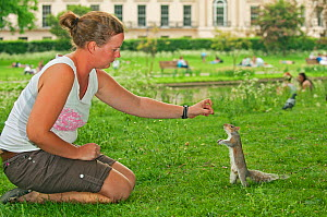 Young woman hand feeding Grey squirrel (Sciurus carolinensis) in parkland, Regent's Park, London. Model released.  -  Terry Whittaker / 2020VISION