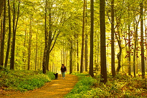 Woman walking dog through woodland at dawn, The National Forest, Midlands, UK, April 2011, model released - Ben Hall / 2020VISION