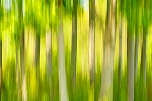 Tree abstract, The National Forest, UK, Spring, 2011 - Ben Hall / 2020VISION