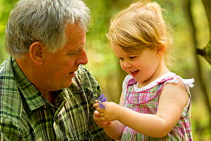 Young girl showing her grandfather a bluebell flower, The National Forest, Midlands, April 2011, Model released. Did you know? According to some estimates Britain has over half the world population of... - Ben Hall / 2020VISION