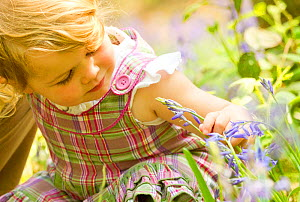 Young girl looking at bluebell flower, The National Forest, Midlands, April 2011, Model released. Did you know? The National Forest is a pioneering project in the heart of the Midlands. Each year more... - Ben Hall / 2020VISION