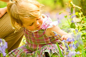 Young girl looking at bluebell flower, The National Forest, Midlands, April 2011, Model released  -  Ben Hall / 2020VISION