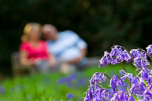 Bluebells (Hyacinthoides non-scripta) at the edge of woodland path with couple sitting on bench in the background, The National Forest, UK, Spring, 2011. 2020VISION Exhibition.  -  Ben Hall / 2020VISION