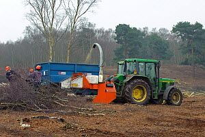 RSPB reserves staff removing birch trees from heathland, chipping waste for recycling, at Minsmere nature reserve, Suffolk, UK. February 2011. Model released  -  Chris Gomersall / 2020VISION