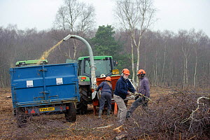 RSPB reserves staff removing birch trees from heathland and chipping waste for recycling, at Minsmere nature reserve, Suffolk, UK. February 2011. Model released.  -  Chris Gomersall / 2020VISION