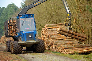 "Forestry workers with ""forwarder"" machine, removing felled timber from Dunwich Forest, Suffolk, UK, February 2011. Non-native Corsican pine trees planted in 1990 are gradually being removed by the For...  -  Chris Gomersall / 2020VISION"