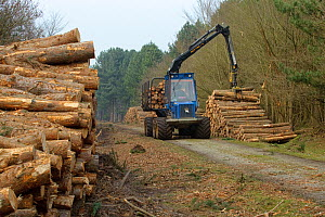 Forestry workers with ^forwarder^ machine, removing felled timber from Dunwich Forest, Suffolk, UK, February 2011. Non-native Corsican pine trees planted in 1990 are gradually being removed by the For... - Chris Gomersall / 2020VISION