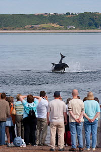 Visitors on Chanonry Point watching Bottlenose dolphins (Tursiops truncatus) playing and breaching, Moray Firth, Inverness-shire, Scotland, UK, August - John MacPherson / 2020VISION