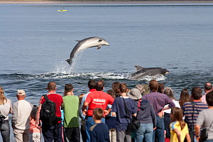 Visitors on Chanonry Point watching Bottlenose dolphins (Tursiops truncatus) playing and breaching, Moray Firth, Inverness-shire, Scotland, UK, May. 2020VISION Exhibition. Did you know? Dolphins are o... - John MacPherson / 2020VISION