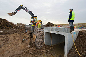 RSPB Project Manager Dave Hedges and Breheny staff at the new water vole habitat. Wetland habitat ecosytem creation for the RSPB by Breheny Civil Engineers at Bowers Marsh RSPB Reserve, Thames Estuary... - Terry Whittaker / 2020VISION
