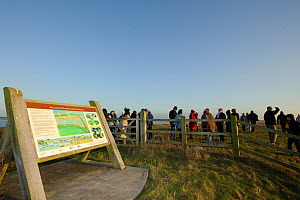 An event to introduce the local community to the RSPB Wallasea Wild Coast Project. RSPB staff and  volunteers showed the birdlife to visitors and explained the plans for the future of Wallasea Island,...  -  Terry Whittaker / 2020VISION
