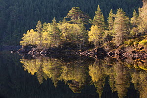 Dawn reflections in Loch Beinn a� Mheadhoin, Glen Affric, Wester Ross, Highlands, Scotland, UK, May 2011. 2020VISION Exhibition. 2020VISION Book Plate.  -  Peter Cairns / 2020VISION
