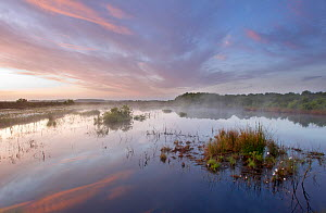 Ballynahone Bog at dawn with steam rising off the water surface, County Londonderry, Northern Ireland, UK, June 2011  -  Ben Hall / 2020VISION
