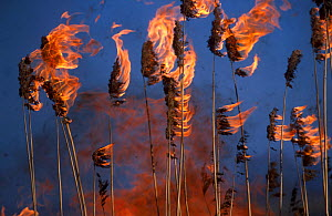 Common Reed (Phragmites australis) on fire. Biebrza National Park, Biebrza marshes, Poland, July.  -  Grzegorz Lesniewski