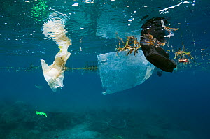 Plastic bag and disposable nappy floating at the surface of the sea. Bunaken National Park, North Sulawesi, Indonesia.  -  Georgette Douwma