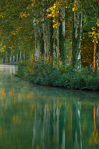 The Canal du Midi at dawn. Castelnaudary, Aude, Languedoc-Roussillon, France, July 2010. - David Noton