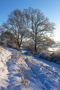 Frost and snow on the trees. Milborne Port, Somerset, England, December 2010. - David Noton