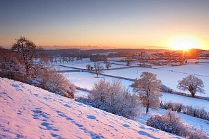 Frost and snow on the trees at sunset. East Hill overlooking Milborne Port, Somerset, England, December 2010. - David Noton