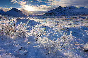 Hoar frost on grass with the Cullin in the distance. Isle of Skye, Scotland, December 2010. - David Noton