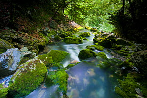 Springs of Yaga River. Escuain Canyon and Valley, Ordesa National Park, Pyrenees, Spain, June 2011.  -  Inaki Relanzon