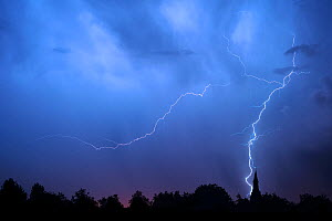 Lightning during thunderstorm at night over church tower and trees. Belgium, May.  -  Philippe Clement