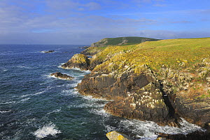 Coastal landscape with rocky headland, Great Saltee Island, County Wexford, Republic of Ireland, June 2011  -  Robert Thompson
