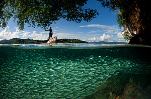 Schooling Silverside fish (Antherinidae) split level with karst limestone walls, West Papuan fisherman in boat, North Raja Ampat, West Papua, Indonesia, February 2002.  -  Juergen Freund