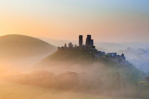 Corfe Castle in early morning mist. Dorset, UK, April 2011. - Ross Hoddinott