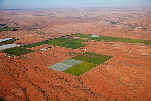 Aerial view of desert vineyards, Northern Cape, South Africa, January 2010  -  Richard Du Toit