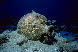 Amphora from Greek wreck, Red Sea. - Doc White