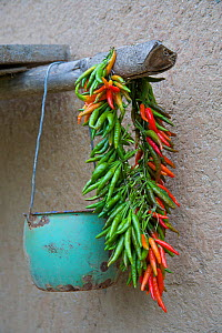 Chili (Capsicum annuum) fruit left outside to dry. Zhouzhi Nature Reserve, Shaanxi, China, October. - Florian Möllers