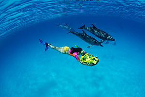 Atlantic Spotted Dolphins (Stenella frontalis) swimming beside a woman riding an underwater scooter. Bahamas, Atlantic Ocean, July.  -  Brandon Cole