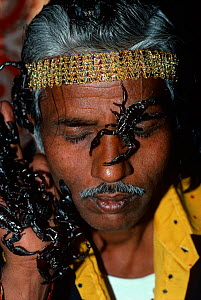 Snake charmer with scorpions climbing over his hands and face, Jaipur, Rajasthan, India, December 2007, Model released  -  Jeff Rotman